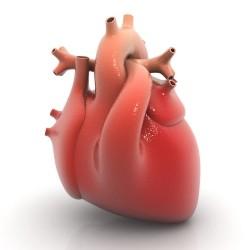 Heart1 E1398437008118